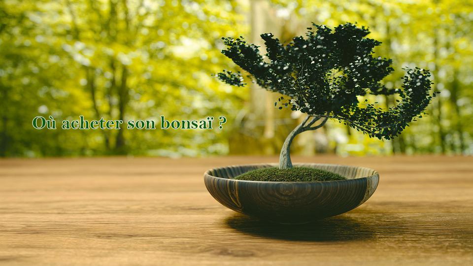 Où acheter son bonsai ?