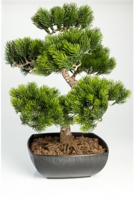 Bonsa d 39 ext rieur entretien bonsai for Arbre bonsai exterieur