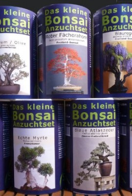 Seedeo-das-kleine-bonsai-kit-de-semis-pour-olivierolive-0-2
