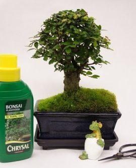 Balai-STYLE-Coffret-cadeau-bonsa-15-cm-ciseaux-et-engrais-0