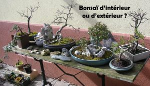 bonsai interieur exterieur